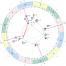 ingres Jowisza do znaku lwa - astrologiczne wejście Jowisza do zodiakalnego znaku Lwa
